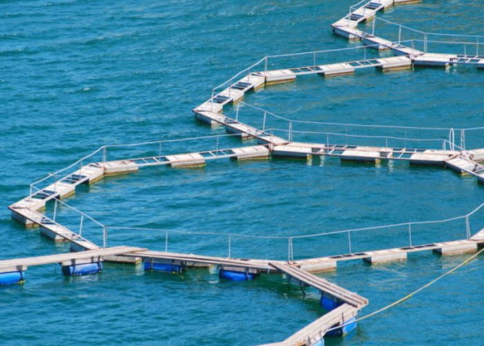 generatore-ossigeno-per-acquacultura